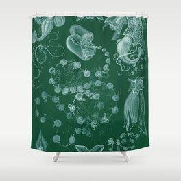 Ernst Haeckel Siphonophorae Hydrozoan Shower Curtain
