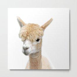 Fawn Alpaca Metal Print