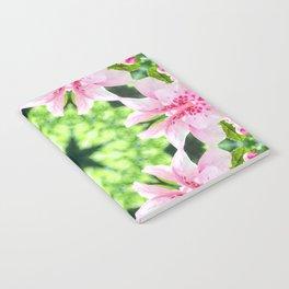 Flowering Notebook