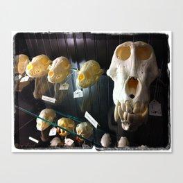 baboon bones Canvas Print