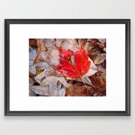autumnal reverie 657 Framed Art Print
