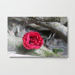 Single Rose Metal Print