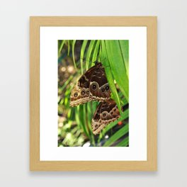 Butterflies on Leaves Framed Art Print