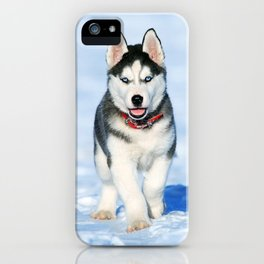 Siberian Husky pup iPhone Case
