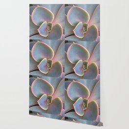 Succulent Dew Drop Wallpaper