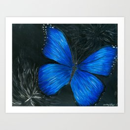 Blue Morpho Butterfly Belize Art Print
