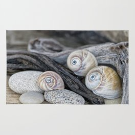 Shark's eye shells and driftwood Rug