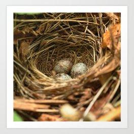 Sparrow eggs Art Print