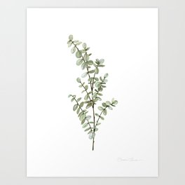 Baby Blue Eucalyptus Watercolor Painting Art Print