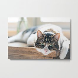 Cat by Nathan Fertig Metal Print