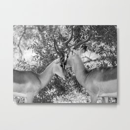 Gazelle (Black and White) Metal Print