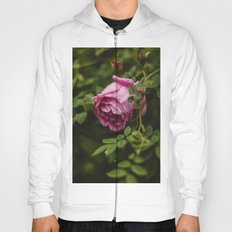 PINK - ROSE - FLOWER - PHOTOGRAPHY Hoody