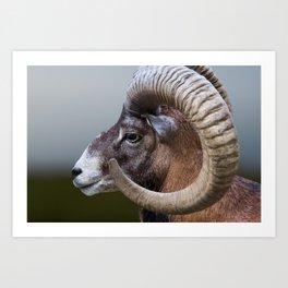 Mountain Goat | Horns | Animal Photography | Nature | Wild Art Print