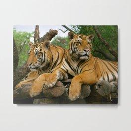 hai der tiger Metal Print