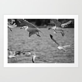 Gulls of the Sea Art Print