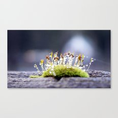 Maco photography Moss Water Drop Rain drops dew Green nature photography Canvas Print