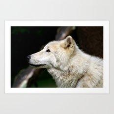 Arctic White Wolf Art Print