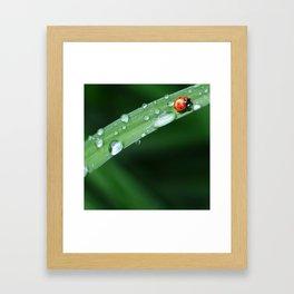 Ladybug in the Leaf Framed Art Print