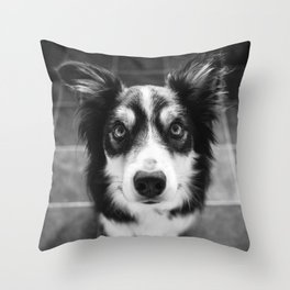 Tri-coloured border collie. Throw Pillow