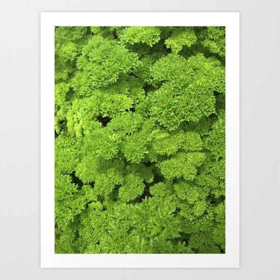 green garden herb II Art Print
