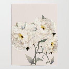 White Peonies Poster