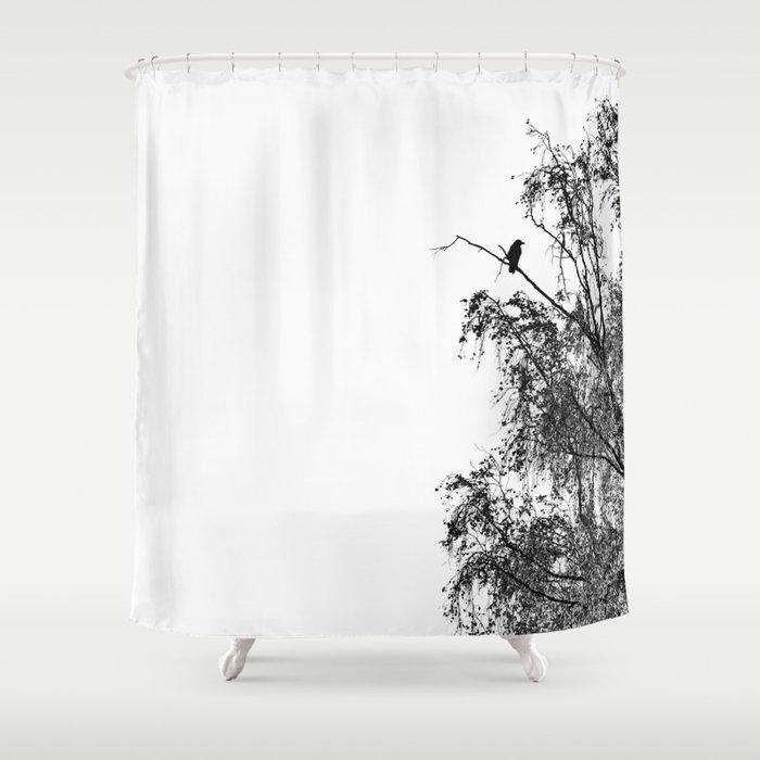 Crow On Birch Shower Curtain By Stefaro