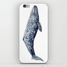 Grey whale iPhone Skin