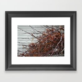 Rain photography, a Photo of a red bush covered in raindrops, It's sure rains in Washington state! Framed Art Print