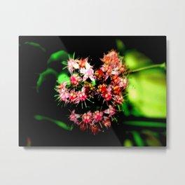 Cacti (Cactaceae) Metal Print
