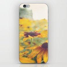 Black Eyed Susan's iPhone & iPod Skin