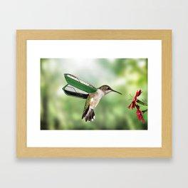 Carabo Hummingbird Framed Art Print