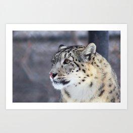 Concerned Mama Snow Leopard Art Print