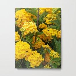 Yellow flowers on green Metal Print