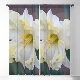 daffodils bloom in spring in the garden Blackout Curtain