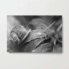 Snale Metal Print