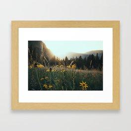 Daisy Meadow in Yosemite Framed Art Print