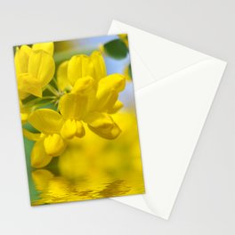 Yellow Spring 237 Stationery Cards
