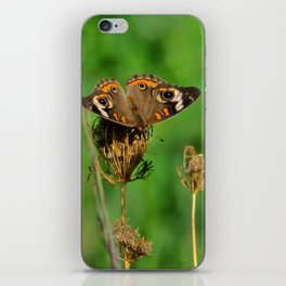 COMMON BUCKEYE BUTTERFLY IN THE FALL (Close-Up) iPhone Skin