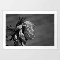 girasol Art Print