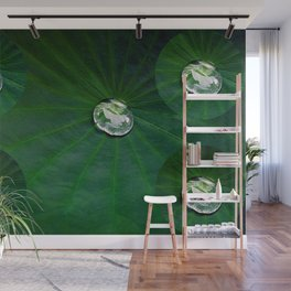 Water Droplets On Lotus Leaf  Wall Mural