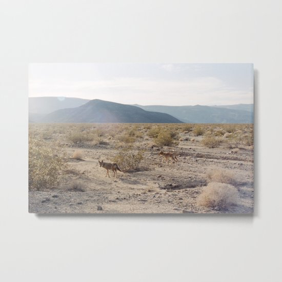 Panamint Valley Coyotes Metal Print