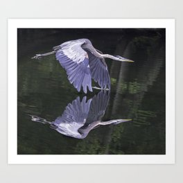 Great Blue Heron 2013 Art Print
