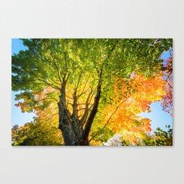 Blushing fall Canvas Print