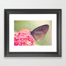Spotted Black Crow Butterfly Framed Art Print
