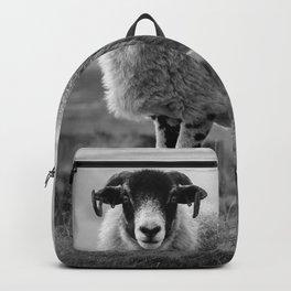 An Exmoor sheep. Backpack
