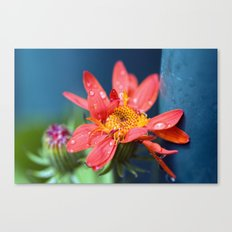 I must have flowers, always, and always. Canvas Print