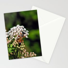 Wasp 1797 Stationery Cards