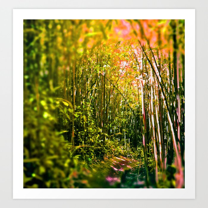 bamboo tunnel Art Print