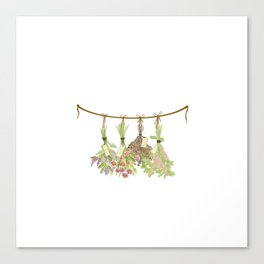 Original Herbs in pastel color Canvas Print