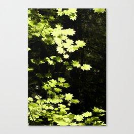Vine Maple Canvas Print